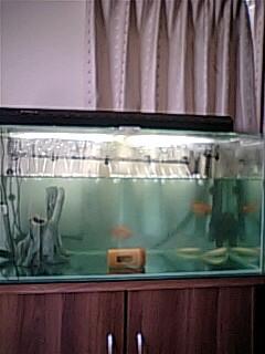 20090412fish_1