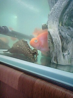 20090412fish_4