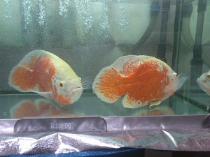 Fish_02