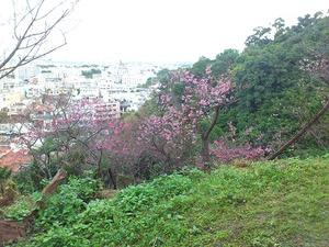 20120129_sakura03